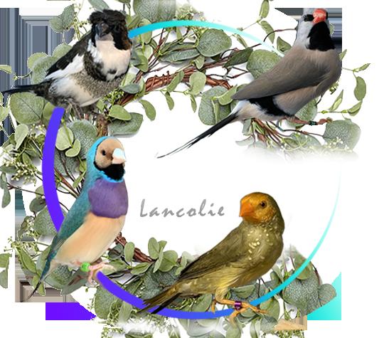 Accueil Lancolie